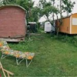 Wohnen im Bauwagen: Mangos im Dschungel