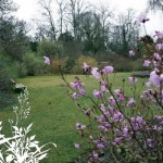 Der Botanische Garten der TU Darmstadt: Ein Date im Regenwald