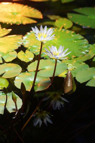 Botanischer-Garten-3
