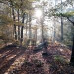 Jogging-Guide, Folge 7: Mit Tobias Geipert auf den Prinzenberg