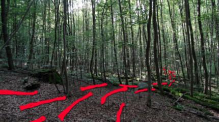 """9. Internationaler Waldkunstpfad: """"Kunst Ökologie"""""""