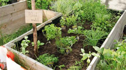 Kulinarisches Gärtnern