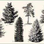 Von Pfahlwurzlern und Patienten: Unsere Bäume