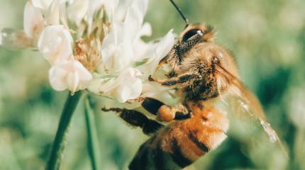 Wildbienen- und Eidechsenlehrpfad